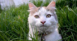 malattie comuni gatto egeo