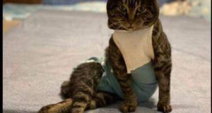 gatto top model