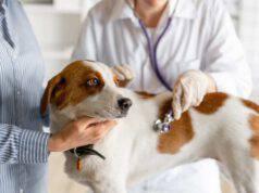 infiammazione granulomatosa del fegato cane