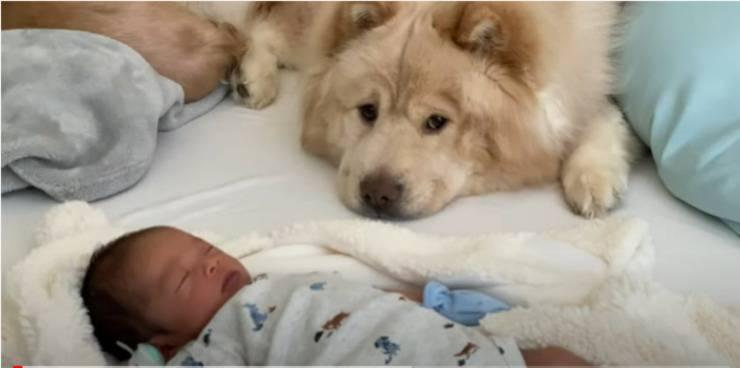 neonato insieme al cucciolo peloso