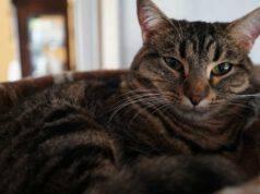 neurite ottica gatto