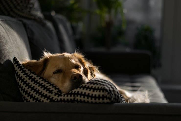 Razze di cani per persone sedentarie