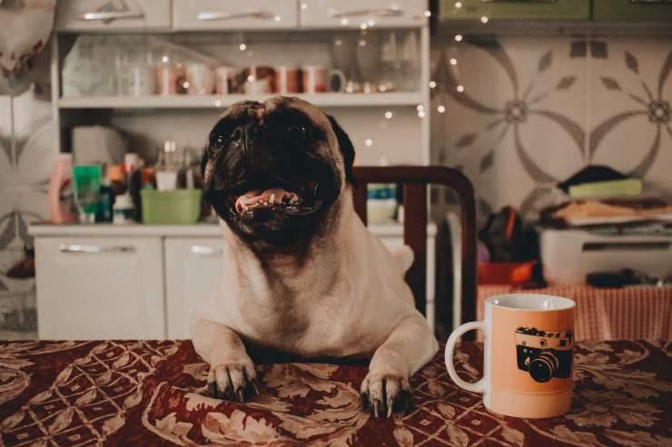 Cane osserva mentre mangio