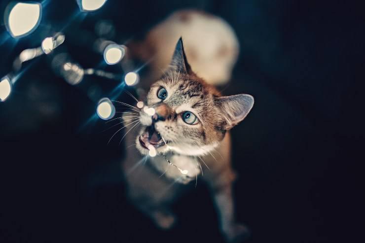 Impedire al felino di masticare cavi