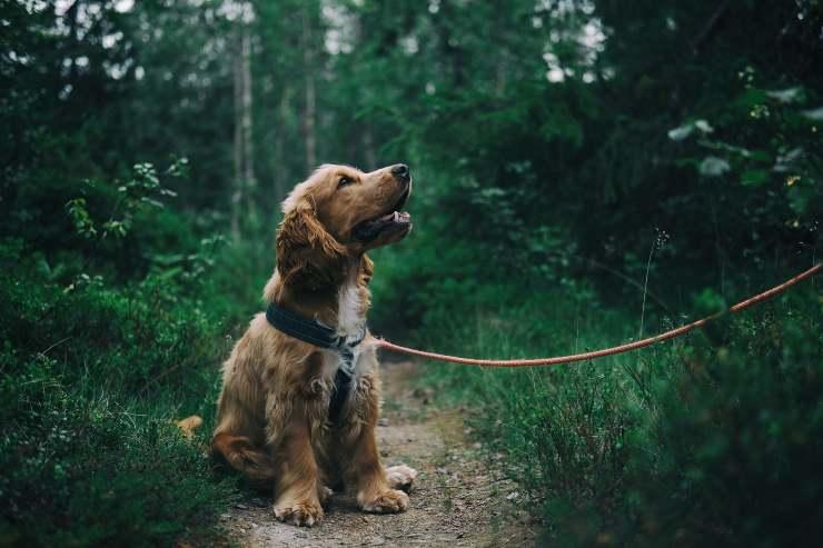 Il cane e gli accessori indispensabili