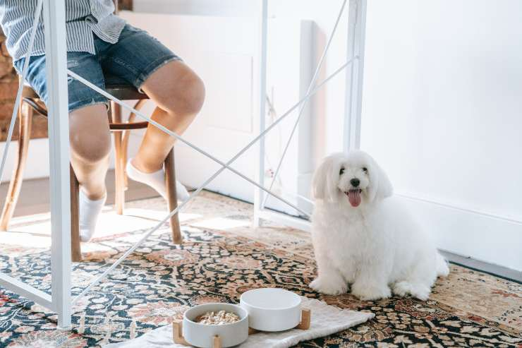 Il cane e la malattia