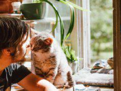 Felini che cercano contatto umano
