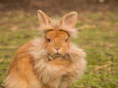 Il coniglio e le convulsioni