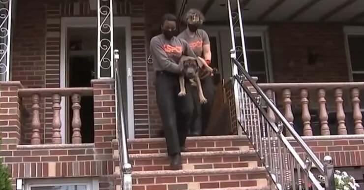 20 cani salvati