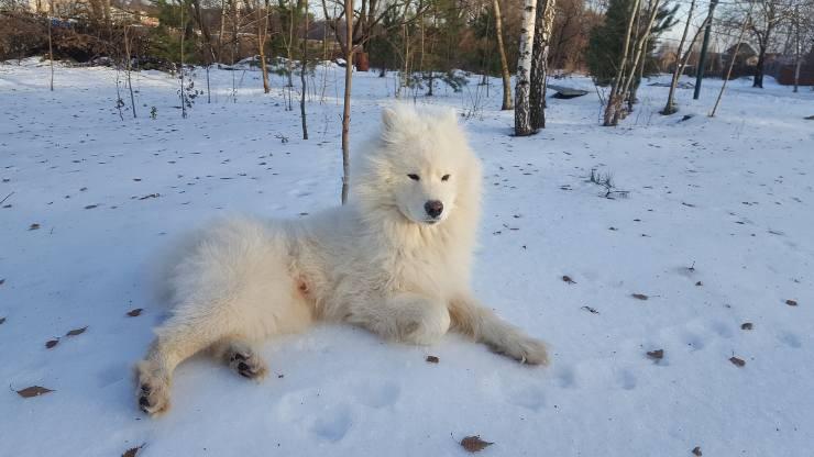 Fido si rilassa sulla neve