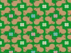 Il test visivo dei capibara : riesci a trovare i due differenti da tutti gli altri ?