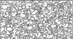 Il test visivo del pulcino tra le pecore solo 1 su 100 riesce a trovarlo