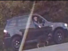 Il comportamento deplorevole dell'uomo che porta a spasso il cane affacciandosi al finestrino della sua automobile.(Screen Video)