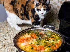zuppa al gatto